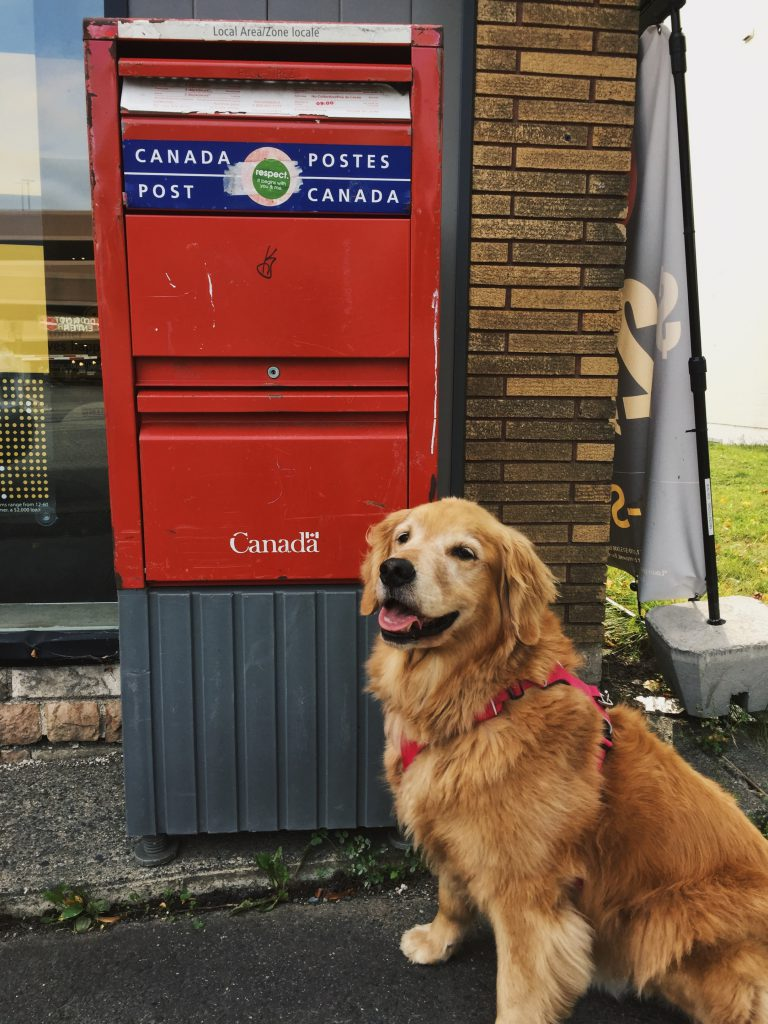 A golden retriever in front of a red Canadian post box
